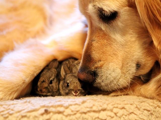 Photo Source: http://www.salon.com/2013/10/09/20_heartwarming_stories_of_interspecies_adoptions/