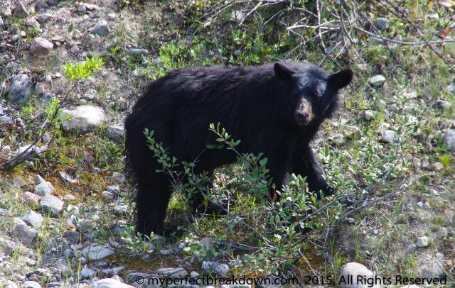 20150930 - The Mamma Bear Inside
