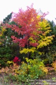 20151011 - Montreal_19