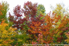 20151011 - Montreal_44