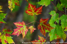 20151011 - Montreal_52
