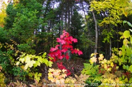 20151011 - Montreal_53