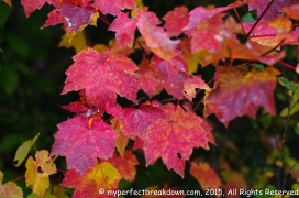 20151011 - Montreal_54