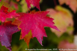 20151011 - Montreal_55